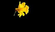 Heraldsoflife full logo 2 black on transparent